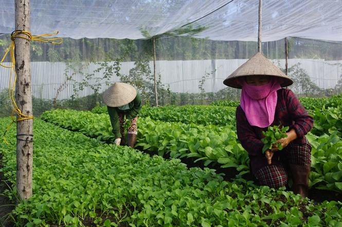 Chưa có cơ sở đào tạo nguồn nhân lực cho nông nghiệp hữu cơ