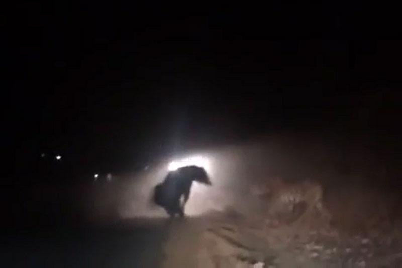 Gấu đen ác chiến với hổ.