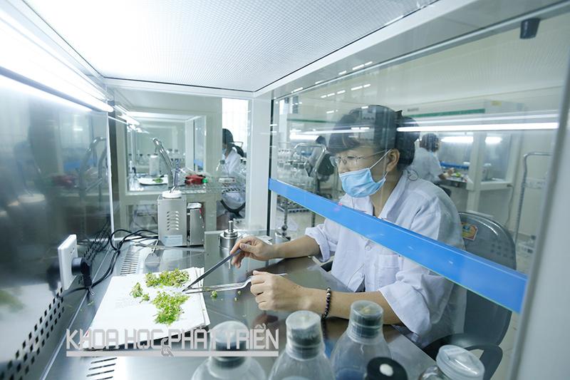 Phòng nuôi cấy mô thuộc Trung tâm Nghiên cứu hoa và cây cảnh (Viện Nghiên cứu rau quả). Ảnh: Kim Phượng