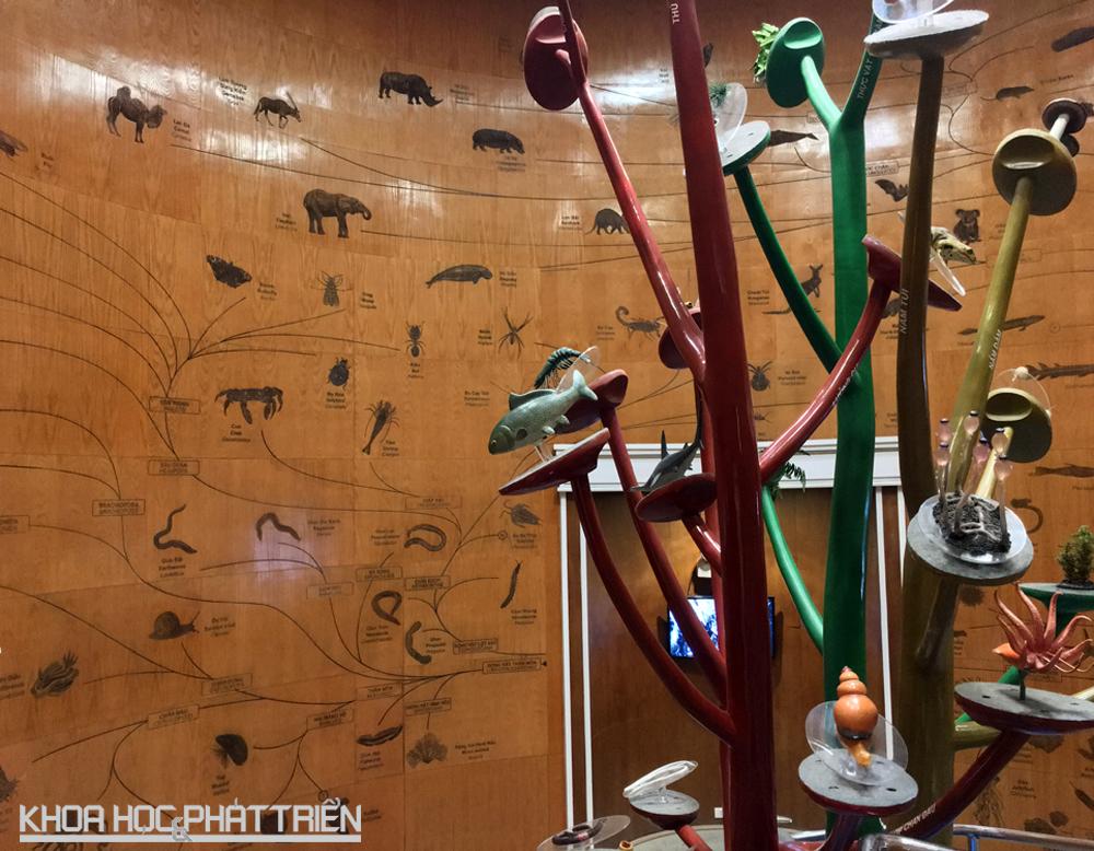 Cây tiến hoá sinh giới được trình bày khá chi tiết trên mặt tường gỗ thể hiện thế giới sự sống đa dạng với 5 giới sinh vật: tiền nhân, nguyên sinh, nấm, thực vật và động vật.