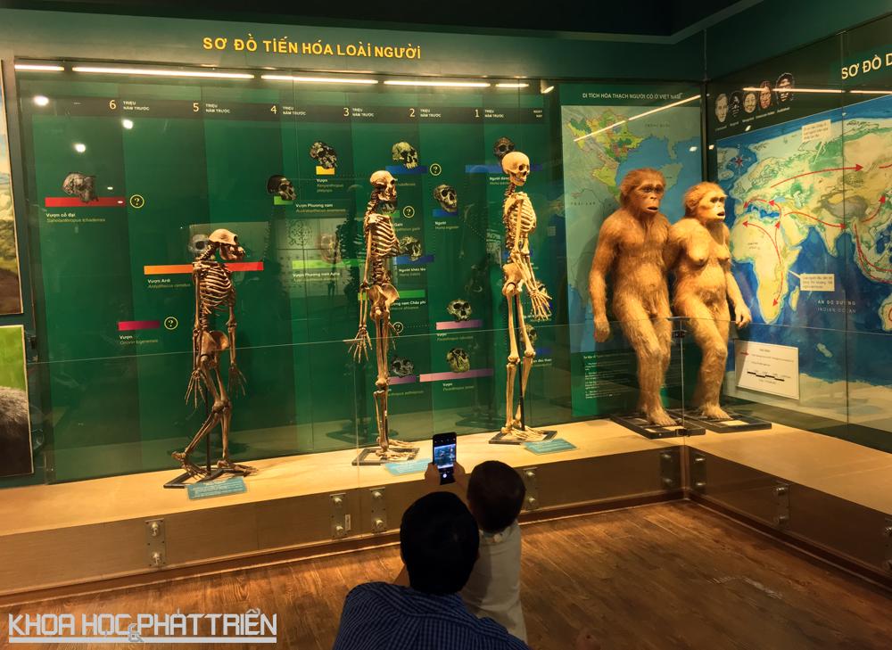 Sơ đồ tiến hóa của loài người tiến hoa từ vượn cổ đại thành người đứng thẳng, khôn ngoan.