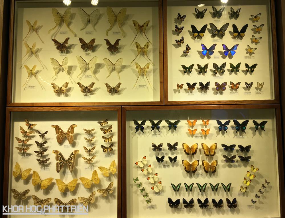 Bộ sưu tập mẫu côn trùng cánh vẩy