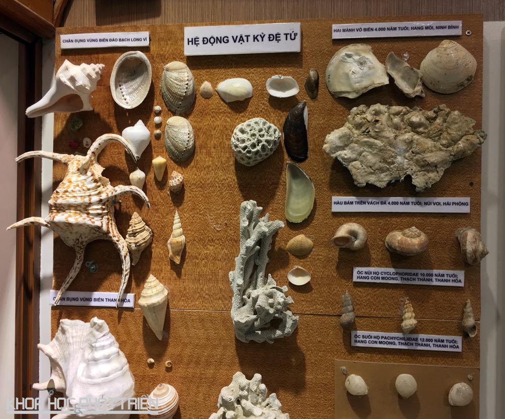 Hệ động vật kỷ đệ tử được tìm thấy ở Ninh Bình