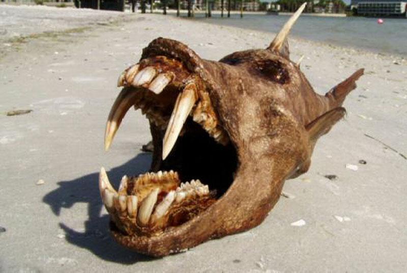 """Những quái vật đáng sợ nhất từng được con người phát hiện. Trong suốt chiều dài lịch sử, con người đã phát hiện được khá nhiều sinh vật kỳ bí, có vẻ ngoài cực kỳ """"quái gở"""". Dưới đây là những quái vật đáng sợ nhất. (CHI TIẾT)"""