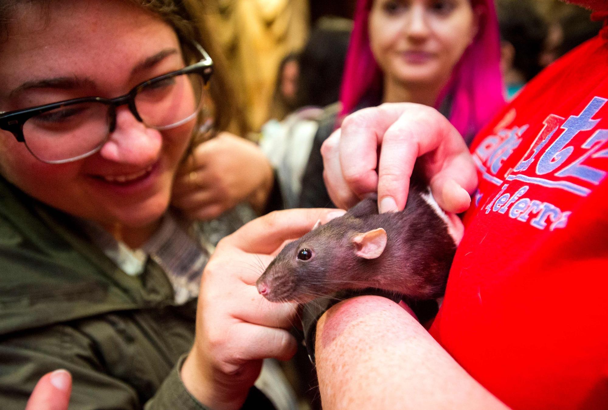 Một người phụ nữ đang trêu đùa con chuột tại quán. Ảnh: Japantimes