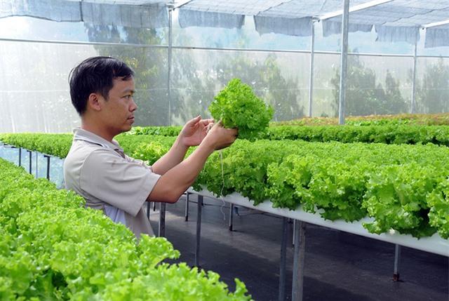 Anh Huấn và vườn rau thủy canh đầu tiên được đầu tư tại huyện Bảo Lâm. Ảnh: Q.Tuấn