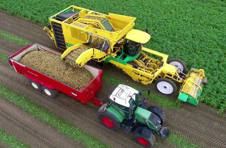 Máy thu hoạch khoai tây tại Hà Lan. Ảnh: Youtube