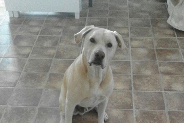 Chó Blat có khả năng đánh hơi và phát hiện ung thư phổi. Ảnh: Bệnh viện Lâm sàng Barcelona.