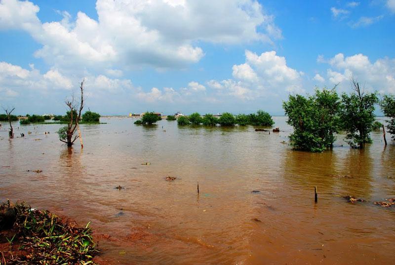 Một bãi cọc nằm trong đầm nước giáp đê sông Chanh, thuộc Yên Giang, thị xã Quảng Yên, tỉnh Quảng Ninh được phát hiện năm 1953. Tới năm 2005, thêm một bãi cọc nữa được tìm thấy ở cánh đồng Vạn Muối (thuộc Nam Hòa, thị xã Quảng Yên, Quảng Ninh). Ảnh: Thanh Sơn HP.