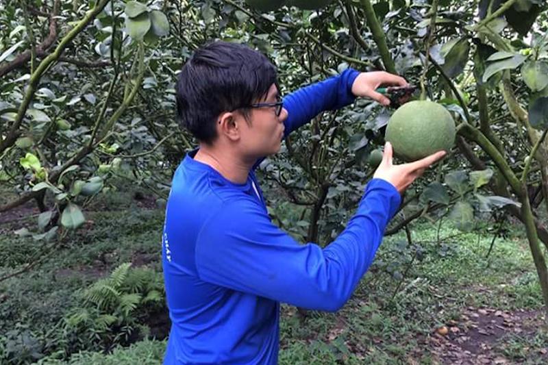 Nông dân huyện Châu Thành chăm sóc vườn cây ăn trái.