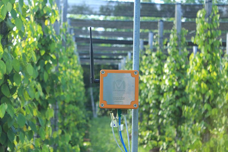 Thiết bị của MimosaTEK lắp đặt ở vườn tiêu tỉnh Đồng Nai. Ảnh: Lan Anh
