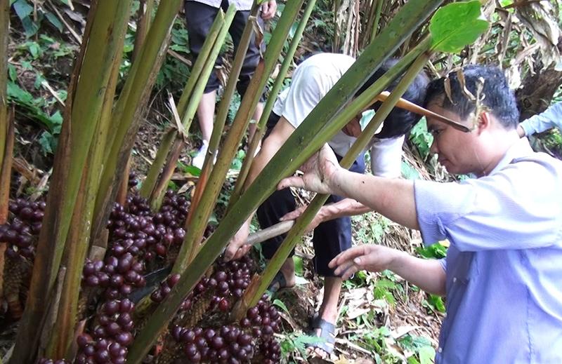 Tiếp cận công nghệ chăn nuôi, phát triển kinh tế rừng