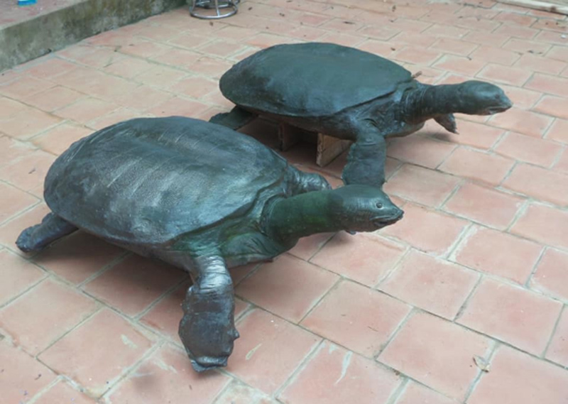 Tiêu bản rùa thật (phía xa, bên phải) và bản chế tác nhờ công nghệ scan 3D. Ảnh: Công ty TNHH 3D Master
