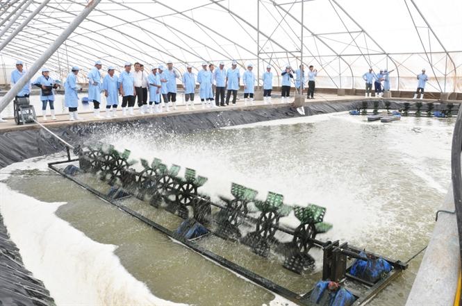 Công nghệ nuôi tôm siêu thâm canh của Việt - Úc.