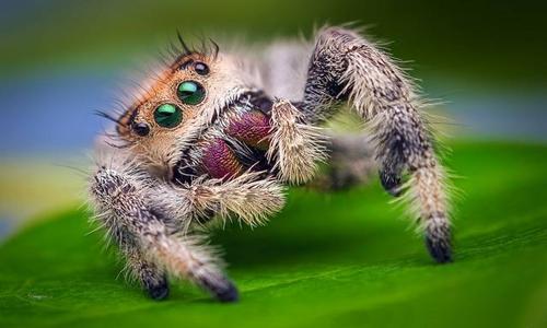 Tất cả nhện trên thế giới tiêu thụ khoảng 400 - 800 triệu tấn thức ăn mỗi năm. Ảnh: Thomas Shahan.