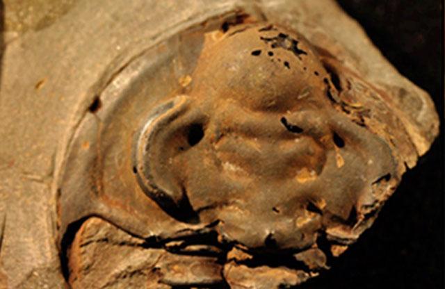 Mắt phải của hóa thạch bọ ba thùy có thể là con mắt cổ xưa nhất từng được khai quật. Ảnh: International Business Times.
