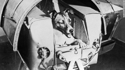 Laika, chú chó đầu tiên bay vào vũ trụ. Ảnh: Jake Wallis Simons