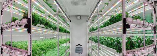 Các trang trại thẳng đứng đáng chú ý trên thế giới - 3