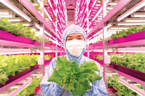 Các trang trại thẳng đứng đáng chú ý trên thế giới - 6