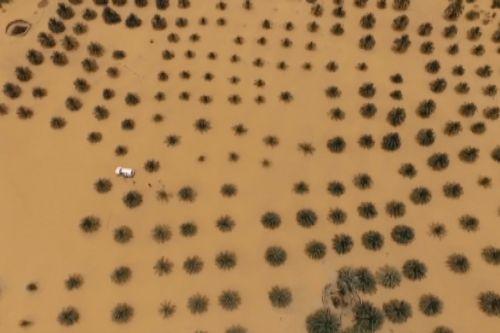 Cả rừng cây bị nuốt chửng bởi cát