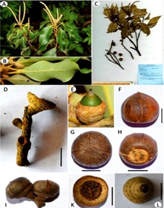 Phát hiện loài thực vật mới ở Vườn Quốc gia Vũ Quang ảnh 1