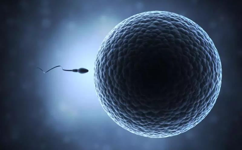 Tế bào lớn nhất trong cơ thể nữ giới là trứng. Tế nào nhỏ nhất trong cơ thể nam giới là tinh trùng. Ảnh: Medical Daily.