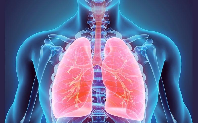 Diện tích bề mặt phổi người tương đương với một sân tennis. Ảnh: Behejsrdcem.