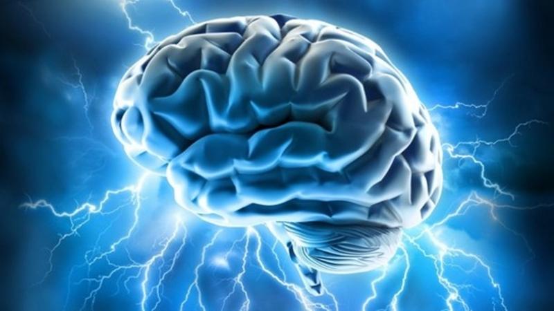 Bộ não tiêu thụ điện năng tương đương với một bóng đèn 10 W. Khoảng 80% bộ não là nước. Xung thần kinh trong não di chuyển với vận tốc 274 km/h. Ảnh: Nocamels.