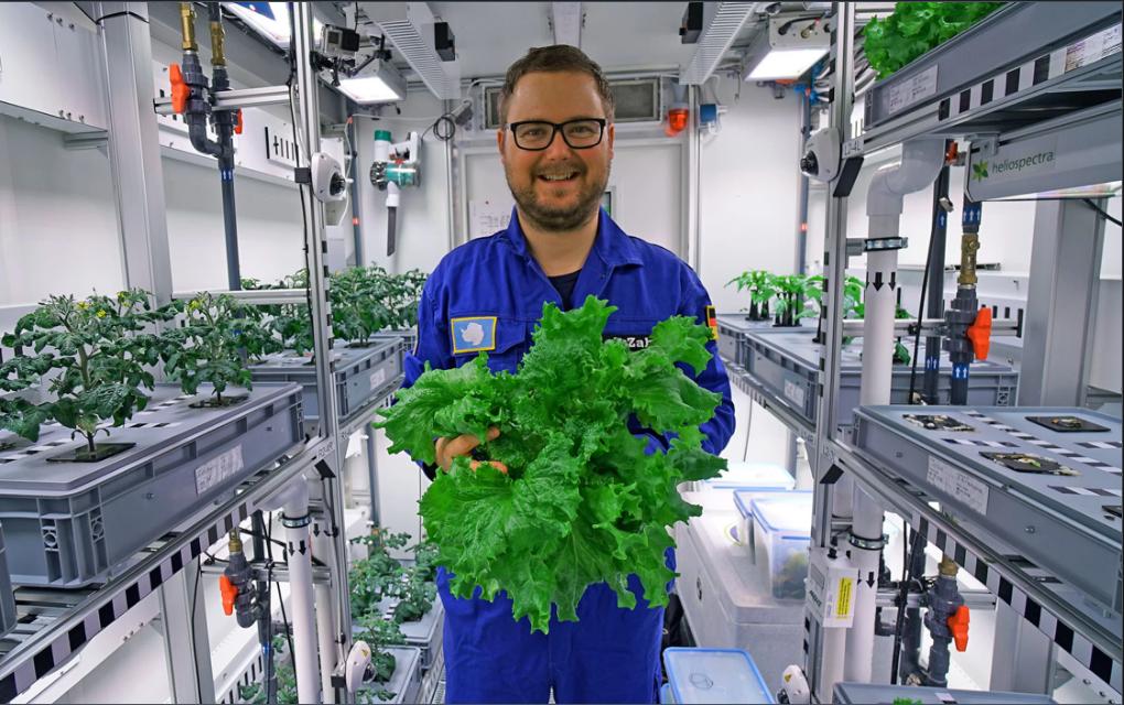 Paul Zabel và rau tươi trồng trong nhà kính EDEN ISS tại Nam Cực. Ảnh: DLR