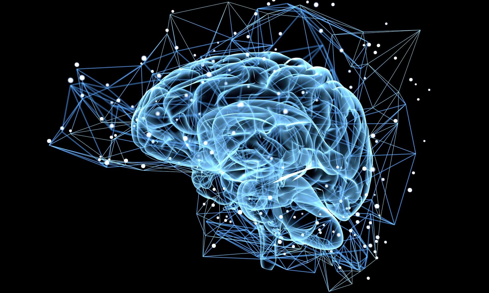 Các neuron mới trong phần não liên quan tới học tập, trí nhớ và cảm xúc của con người. Nguồn: The Guardian
