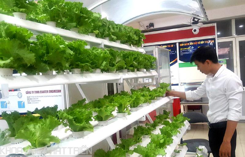 Mô hình trồng rau thủy canh được nhiều khách quan tâm