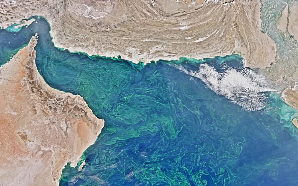 Diện tích tảo biển và sinh vật phù du – gây nên tình trạng thiếu hụt oxy – đang lan rộng trên Biển Ả Rập, mùa đông 2015. Ảnh: Vệ sinh quan trắc Trái Đất của NASA.