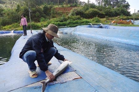 Một cơ sở nuôi cá tầm tại huyện Kon Plông. Ảnh:VGP/Bạch Dương