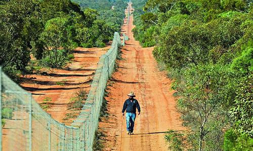 Hàng rào ngăn mèo dài nhất thế giới nhằm bảo tồn sinh vật bản địa. Ảnh: Australian.
