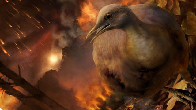Tổ tiên của loài chim đã sống sót sau vụ thiên thạch rơi như thế nào. Ảnh: BBC News
