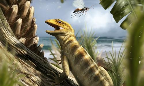 Hóa thạch Megachirella wachtleri có niên đại 240 triệu năm là tổ tiên cổ xưa nhất của thằn lằn và rắn hiện đại. Ảnh: Davide Bonadonna.