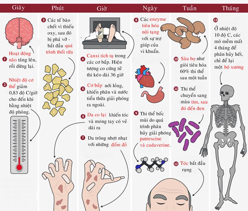 Những biến đổi của cơ thể người sau khi chết