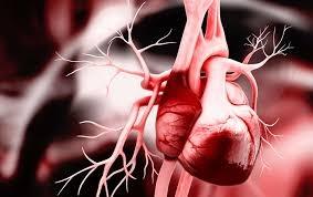 Trước khi có phát hiện của các nhà khoa học Đức, khoa học vẫn chưa hiểu rõ về quá trình hình thành trái tim ở phôi thai - Ảnh: Liya Graphics/Max Pixel