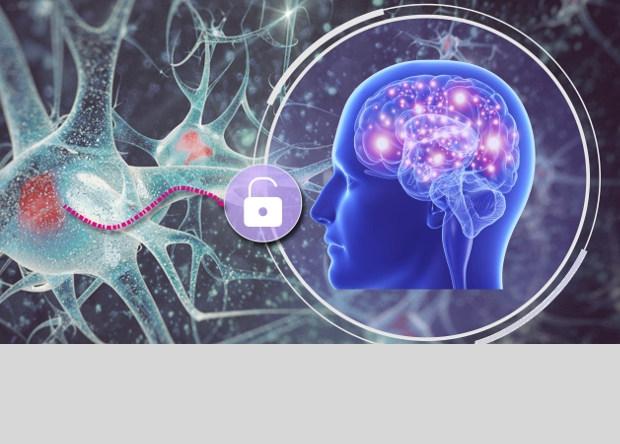 Mật khẩu sóng não cũng là dữ liệu sinh trắc học, một mặt sẽ là duy nhất cho mỗi cá nhân và mặt khác, dữ liệu đó có thể dễ dàng thay đổi - Ảnh: Chen Song, University of Buffalo