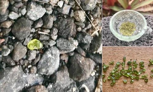 Đá olivine do người dân nhặt ở gần khu vực dung nham chảy qua. Ảnh: Twitter.