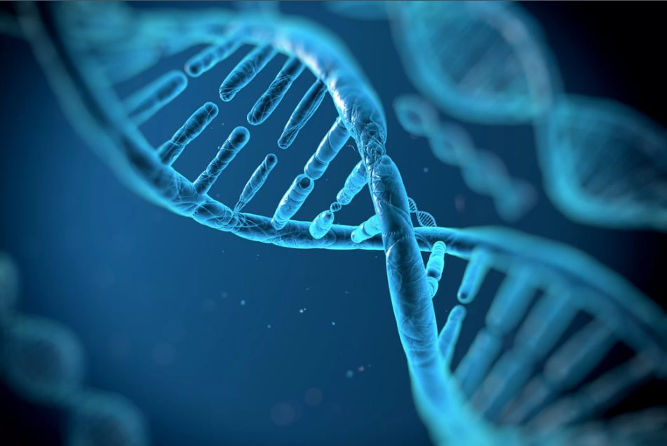 DNA có khả năng lưu trữ và phục hồi thông tin máy tính. Ảnh: vitstudio/Shutterstock