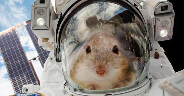 Space X phóng tên lửa Falcon 9 đưa những chú chuột thí nghiệm lên Trạm vũ trụ Quốc tế ISS. Ảnh: Futurism