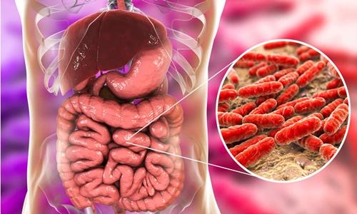 Vi khuẩn Lactobacillus trong ruột người. Ảnh: Shutterstock.
