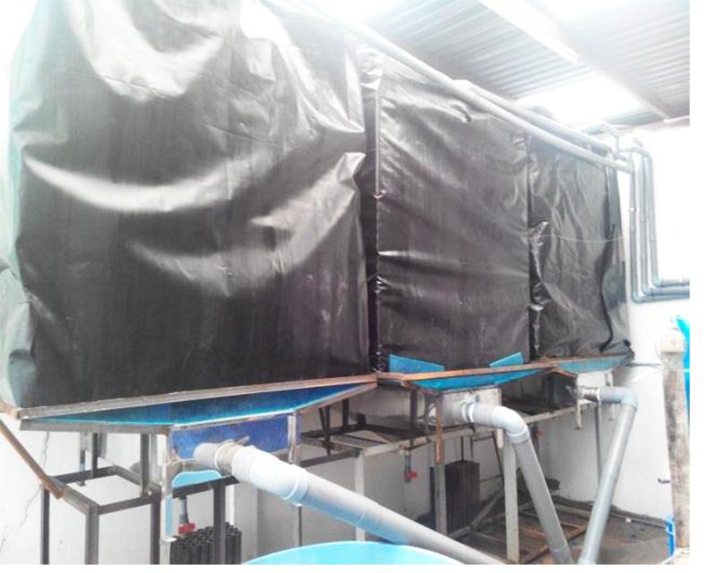 Một phần của hệ thống nuôi cá chình bông theo công nghệ RAS