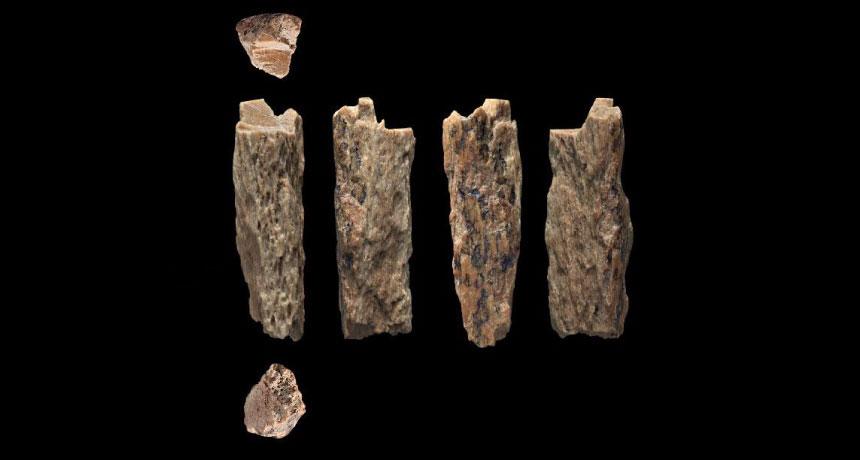 Ảnh: Ảnh chụp các mảnh xương 50,00 tuổi (từ nhiều góc nhìn) được khai quật trong hang Denisova ở Siberia vào năm 2012. Chúng thuộc về một cô gái có dòng máu lai giữa người Neanderthal và Denisova
