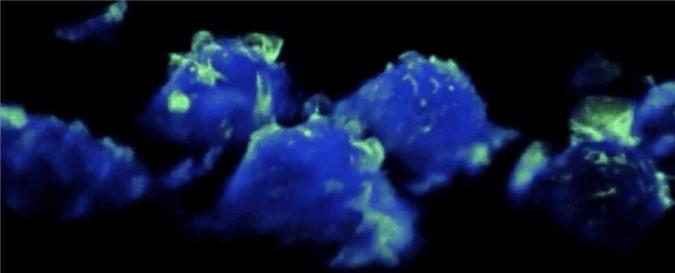 Đoạn phim ấn tượng này tiết lộ cấu trúc chưa từng thấy của hệ thống miễn dịch, đồng thời mở ra cơ hội tiêu diệt ung thư - Ảnh 1.