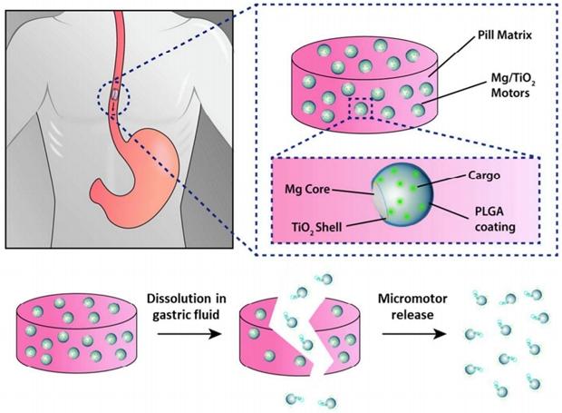 Sơ đồ giải phóng động cơ siêu nhỏ khỏi viên nang trong dạ dày - Ảnh: ACS Nano