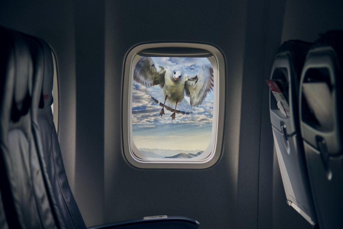 Các vụ tai nạn máy bay va chạm với chim đang bay trên trời luôn khiến ngành hàng không phải đau đầu. Ảnh: Futurism.