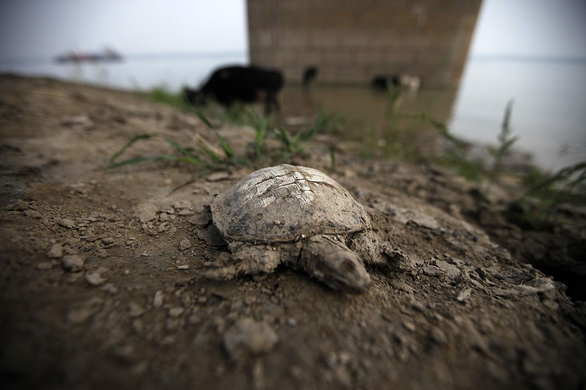 Hạn hán sẽ khiến nền nông nghiệp của Trung Quốc tổn thất nặng nề. (Nguồn: AP)