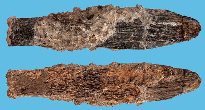 Con dao được làm từ xương động vật. (Nguồn: Sciencenews.org)